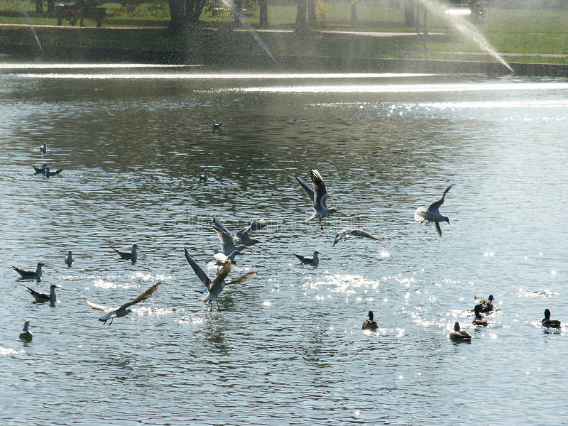 Ptaki fotografia royalty free