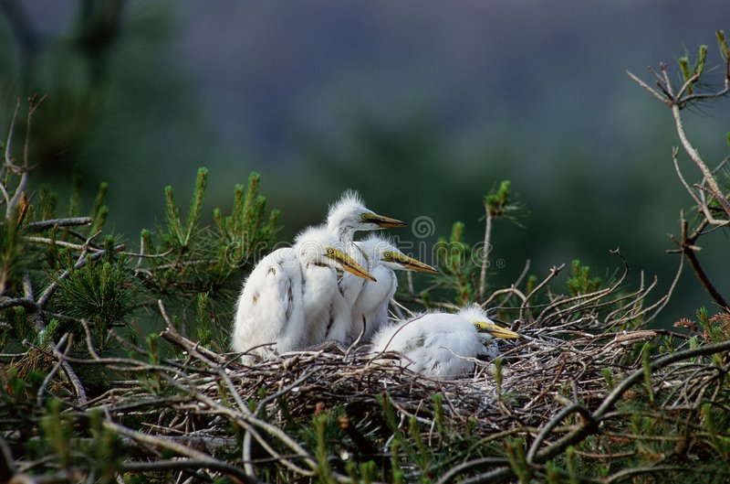 ptaki fotografia stock