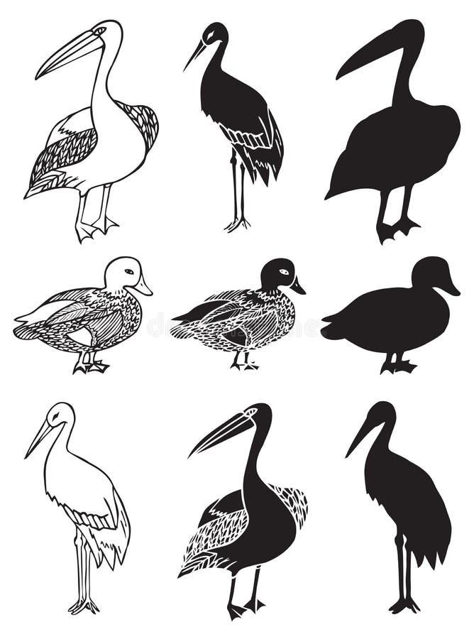 Ptaki bocianowa kaczka i pelikan ilustracji
