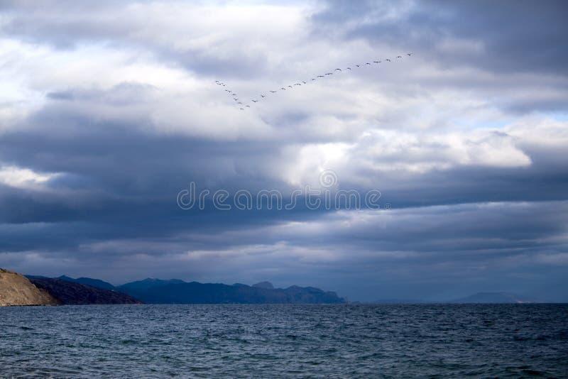 Ptaki, Crimea obraz royalty free