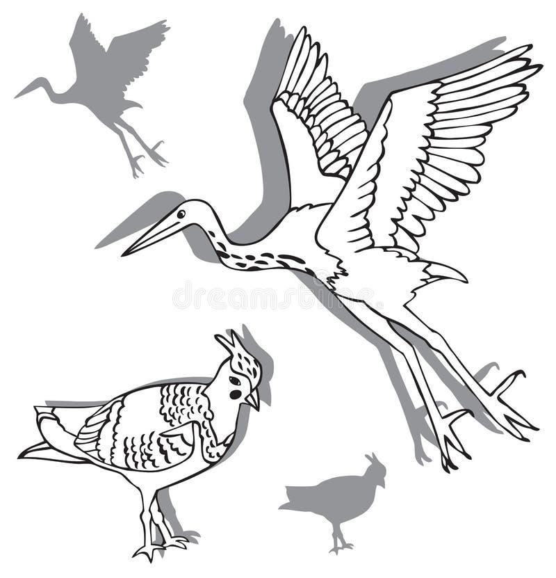 Ptaki czapla i czajka ilustracja wektor