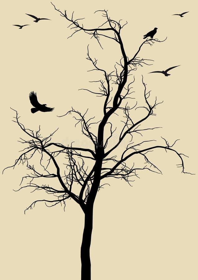 ptaki drzewni ilustracji
