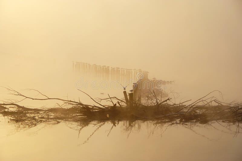 Ptaki, gałąź, Mglisty ranek na jeziorze zdjęcia stock