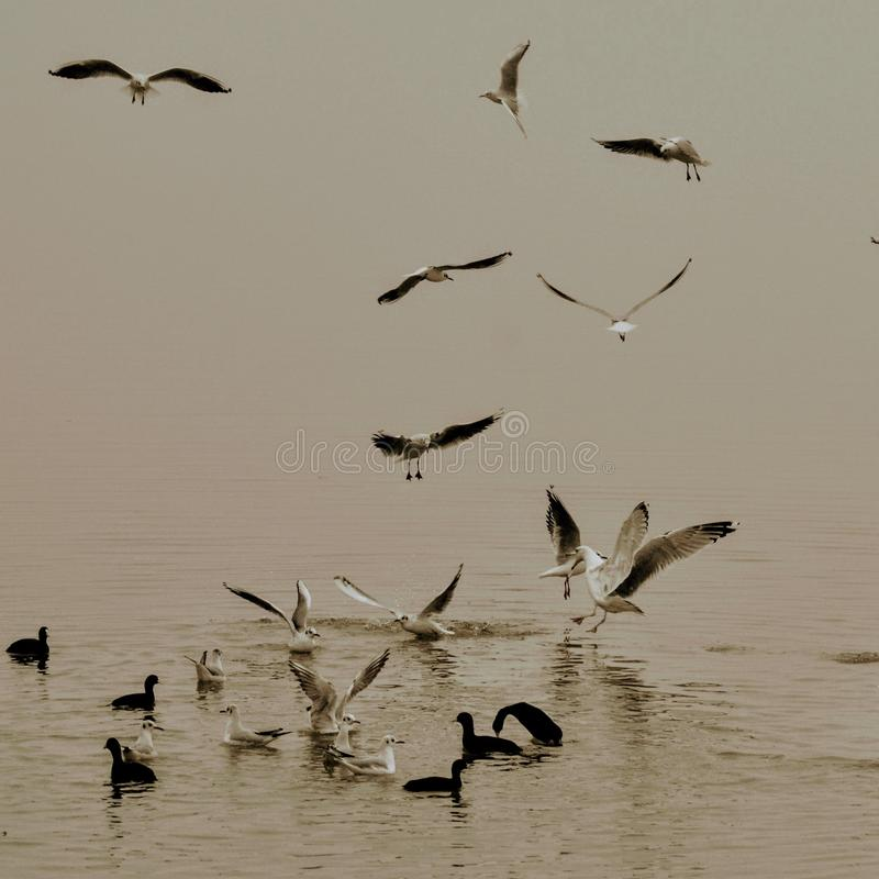 ptaki gra obrazy stock