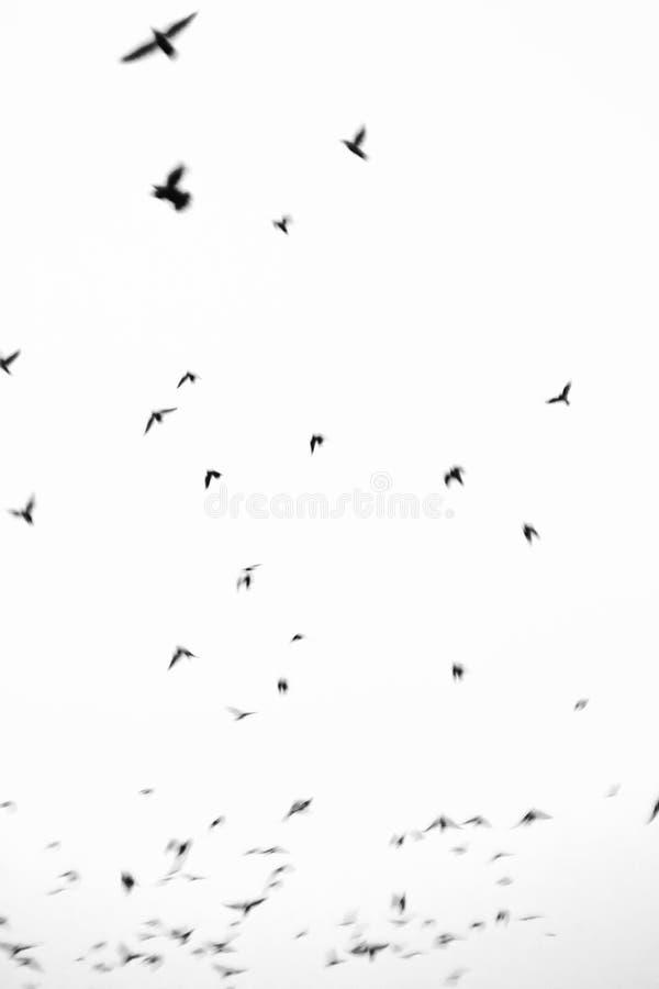 ptaki gromadzą się latanie obraz stock
