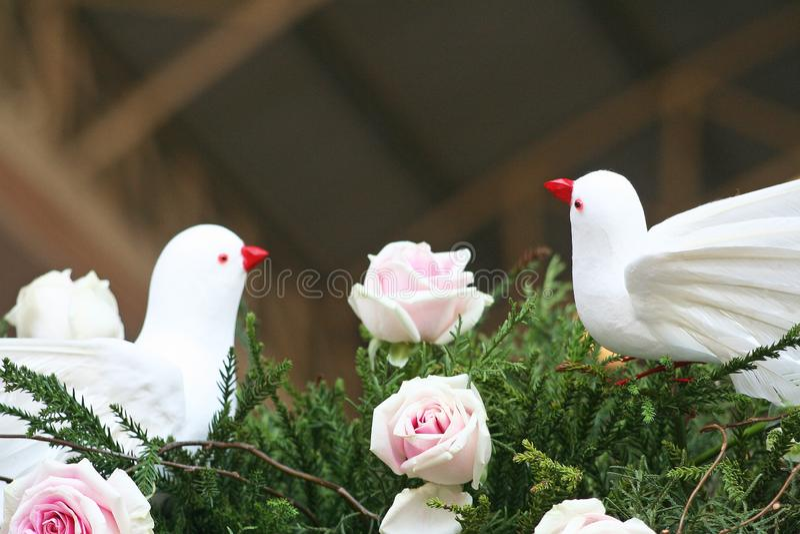 Ptaki i menchii róże fotografia stock