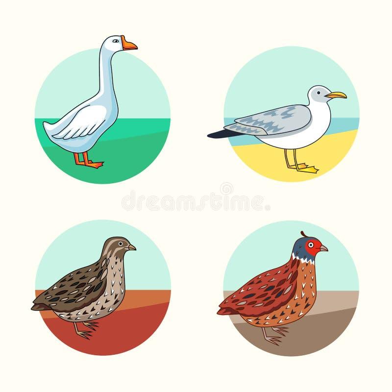 ptaki Kalifornia przepiórka Gąska Śledziowy frajer Kreskówka styl royalty ilustracja