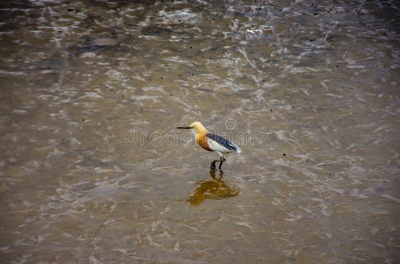 Ptaki karmi w morzu przy uderzeniem Poo, Samut Prakan fotografia stock
