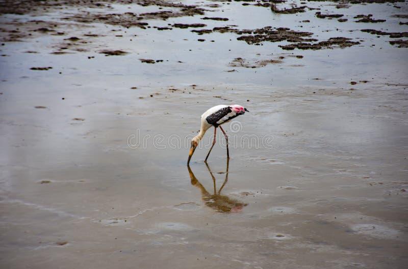 Ptaki karmi w morzu przy uderzeniem Poo, Samut Prakan zdjęcie stock