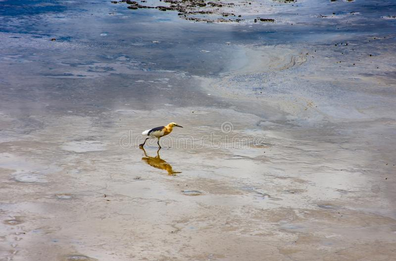Ptaki karmi w morzu przy uderzeniem Poo, Samut Prakan fotografia royalty free