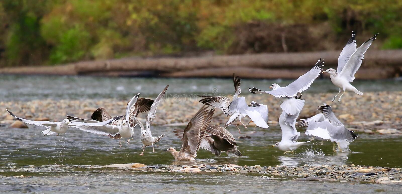 Ptaki który symbolizuje wolność obraz stock