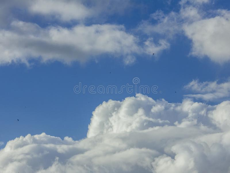 Ptaki Lata Nad chmury obraz royalty free