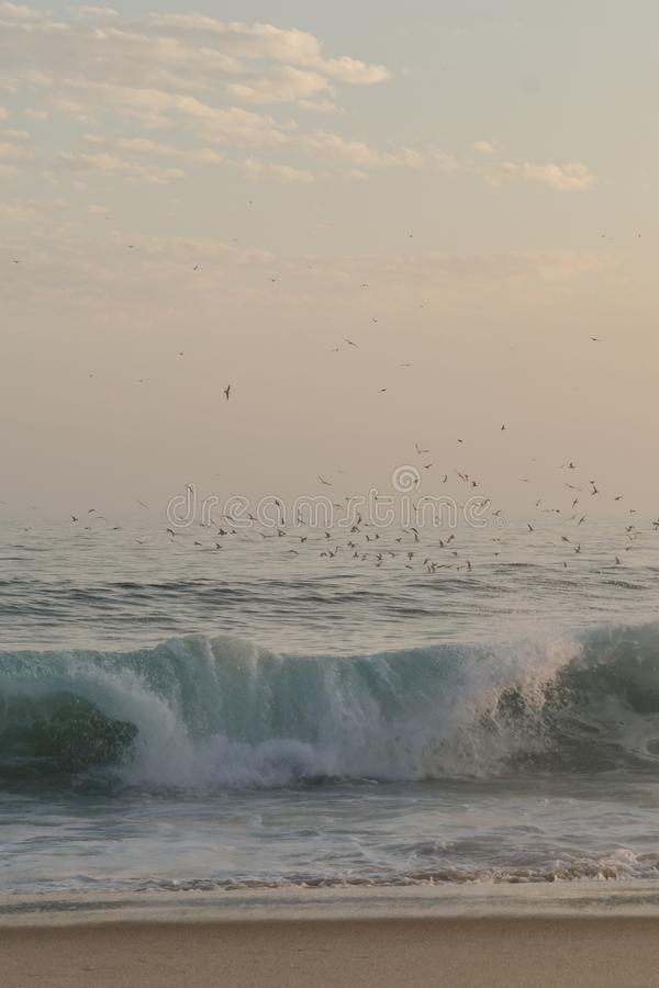 Ptaki lata nad fala obraz stock