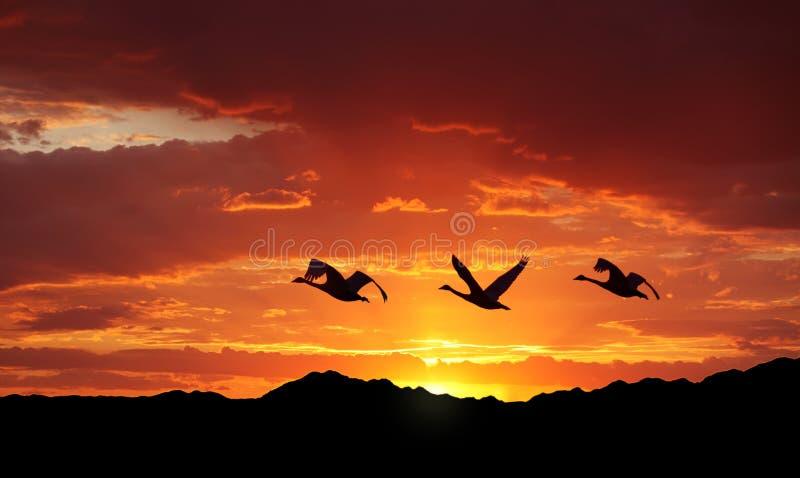 Ptaki lata nad górami przy zmierzchem obrazy stock