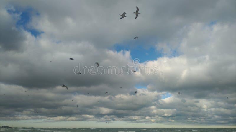 Ptaki lata nad plaża i jezioro michigan zdjęcia stock