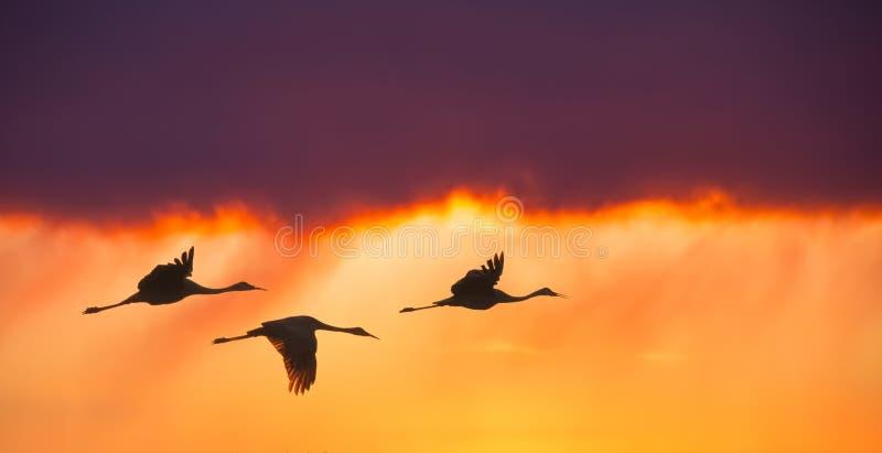 Ptaki lata przeciw wieczór zmierzchu panoramicznemu widokowi fotografia stock