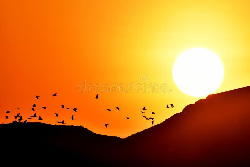 Ptaki lata przy wschodem słońca jako słońce wzrastają obraz stock