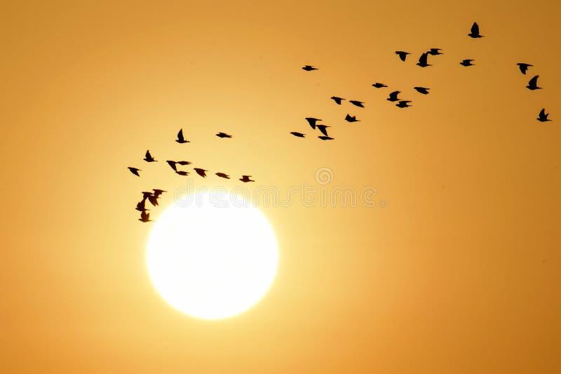 Ptaki lata przy wschodem słońca jako słońce wzrastają obraz royalty free