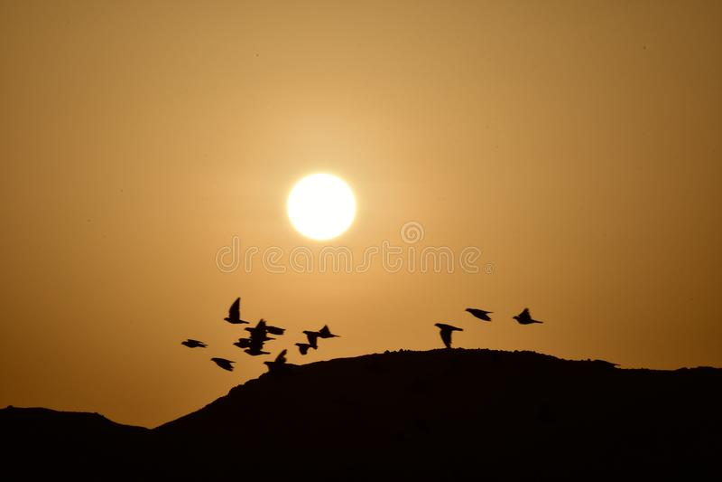 Ptaki lata przy wschodem słońca jako słońce wzrastają obrazy stock