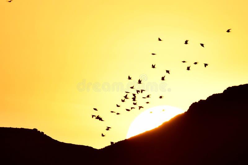 Ptaki lata przy wschodem słońca jako słońce wzrastają nad piasek górami obraz royalty free