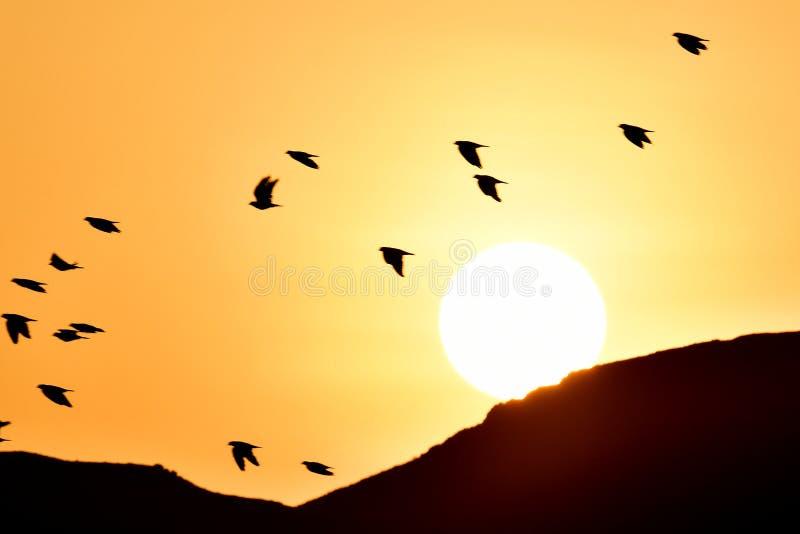 Ptaki lata przy wschodem słońca jako słońce wzrastają nad piasek górami zdjęcie stock