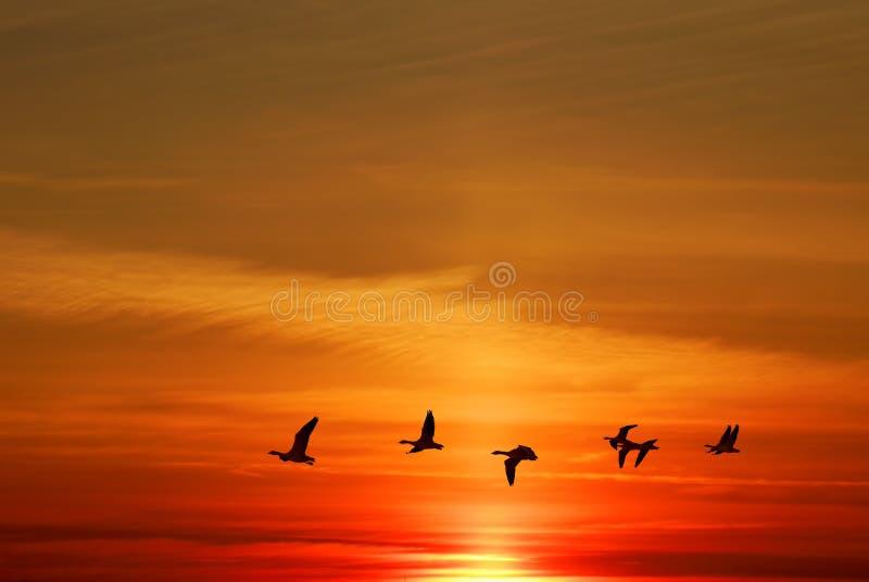 Ptaki lata przy wschodem słońca lub wschodem słońca zdjęcie stock