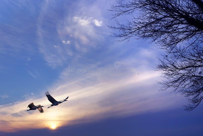 Ptaki lata przy wschodem słońca lub wschodu słońca wiejskim krajobrazem fotografia stock