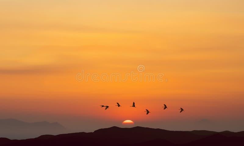 Ptaki lata przy wschodem słońca nad górami obrazy royalty free
