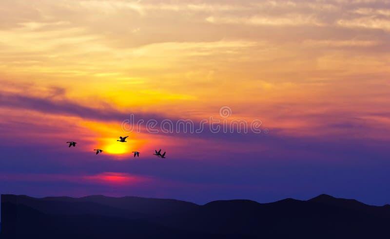 Ptaki lata przy zmierzchem nad górami zdjęcia stock