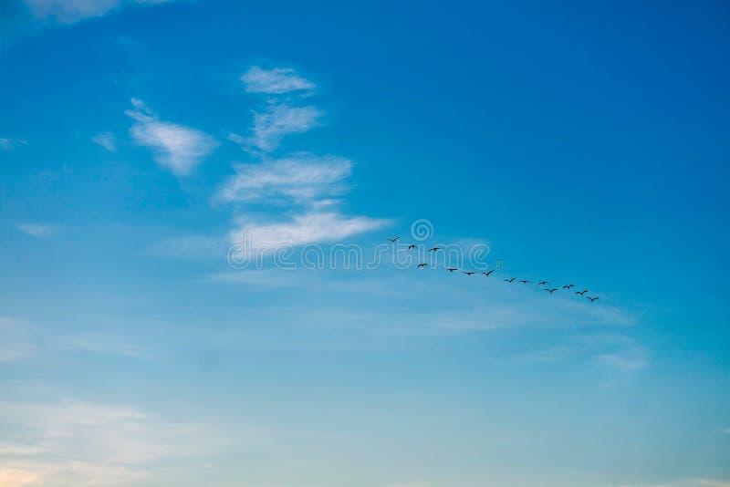 ptaki lata stwarzać ognisko domowe na białej niebieskie niebo miękkiej części chmurze zdjęcie stock