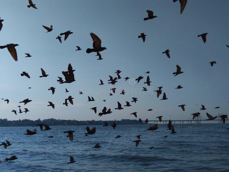Ptaki Lata w formacji Nad morzem fotografia royalty free