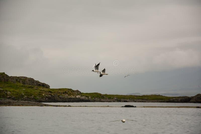 Ptaki lata w niebie z skrzydłami szeroko otwarty na chmurzącym chmurnym summ fotografia stock
