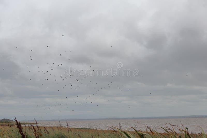 Ptaki latają nad zatoka zdjęcie royalty free