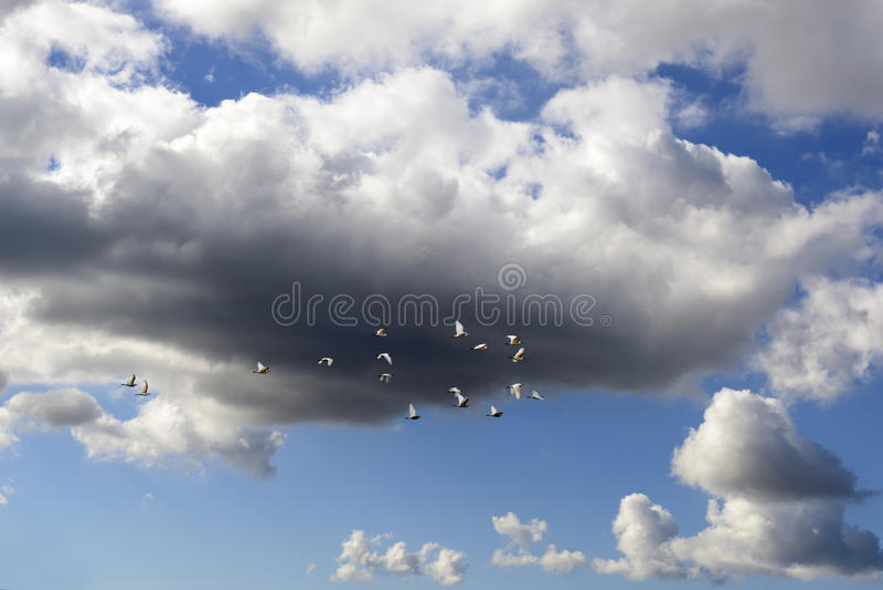 Ptaki migrujący obraz stock