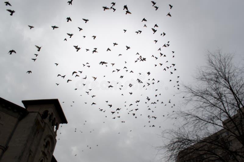 Ptaki migrujący w mieście obraz royalty free