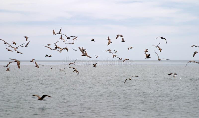 ptaki morskie obraz royalty free