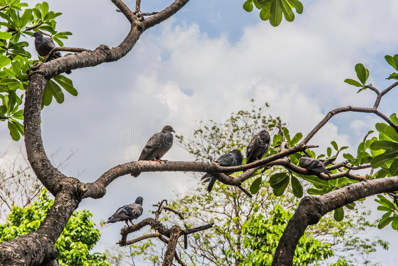 Ptaki na gałąź zdjęcia royalty free