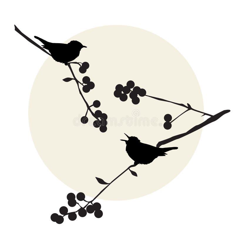 Ptaki na gałąź - set wektorowi elementy ilustracji