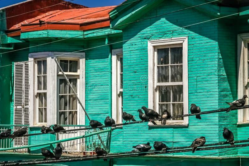 Ptaki na liniach energetycznych zdjęcie stock