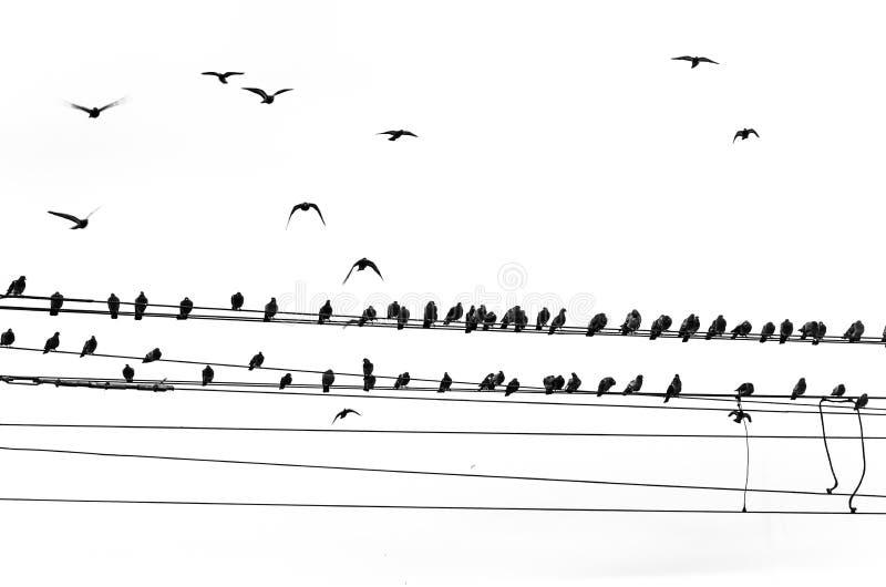 Download Ptaki Na Linii Energetycznej Zdjęcie Stock - Obraz złożonej z dymówka, telefon: 28954096