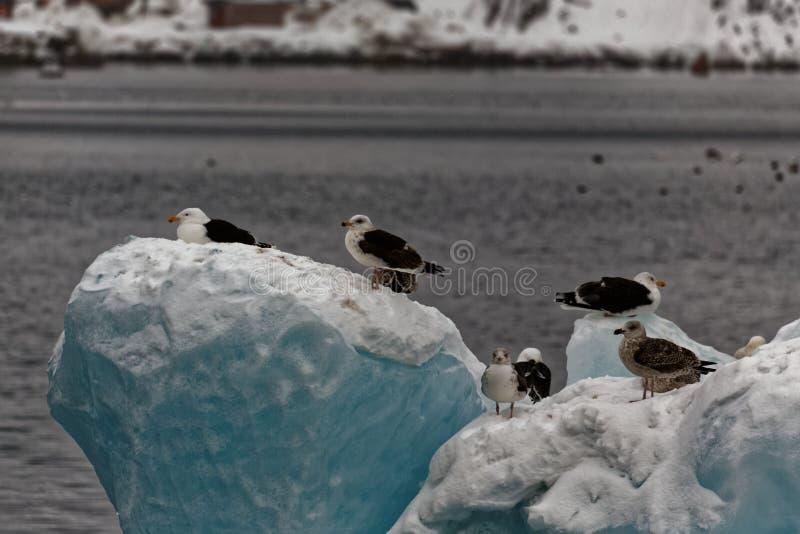 Ptaki na lodzie obraz royalty free