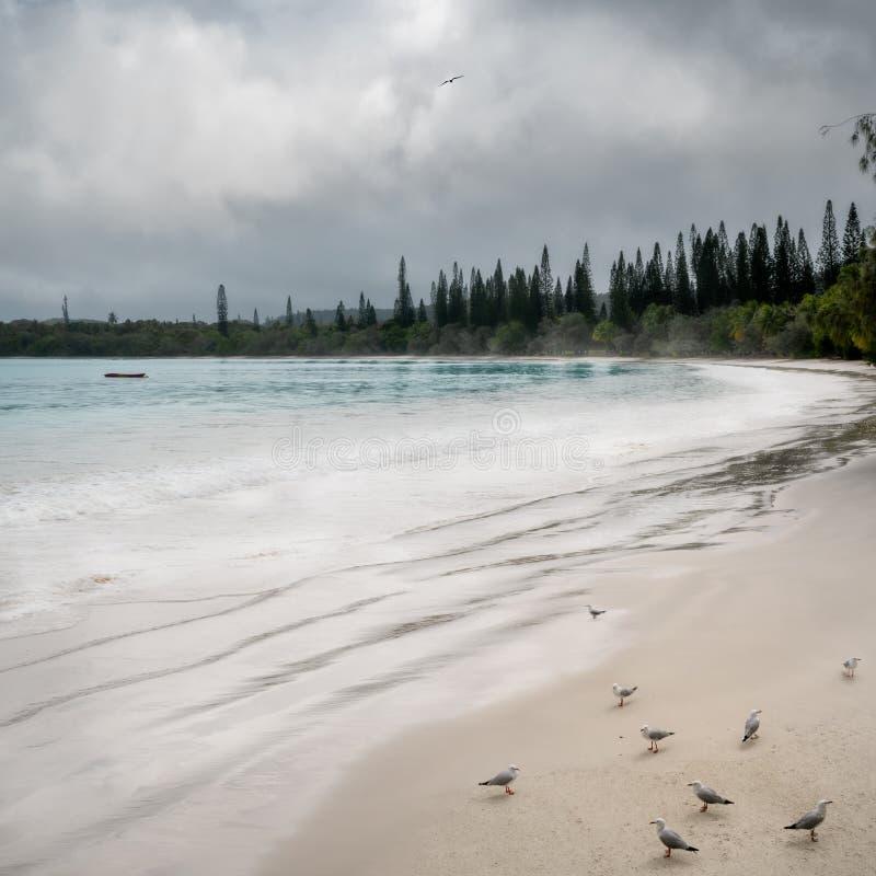 Ptaki na pięknej plaży Kuto Bay na Wyspie Sosnów zdjęcie stock