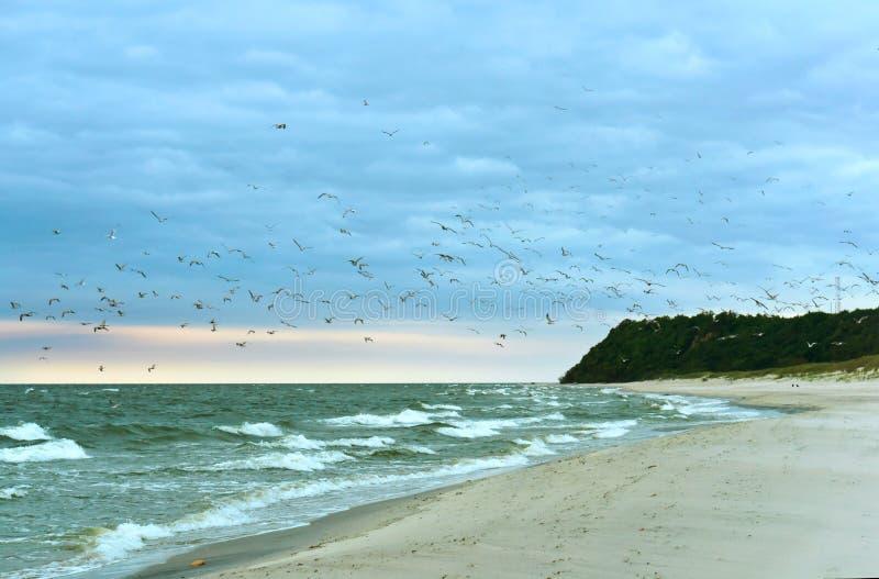 Ptaki na plaży, kierdel ptaki nad morzem fotografia stock