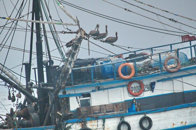 Ptaki na połowu trawlerze obrazy royalty free