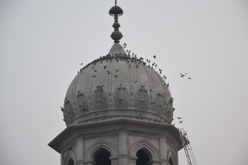 Ptaki na Religijnym miejscu zdjęcie royalty free