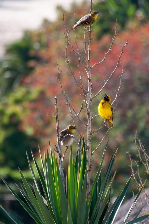 Ptaki na roślinie zdjęcia royalty free