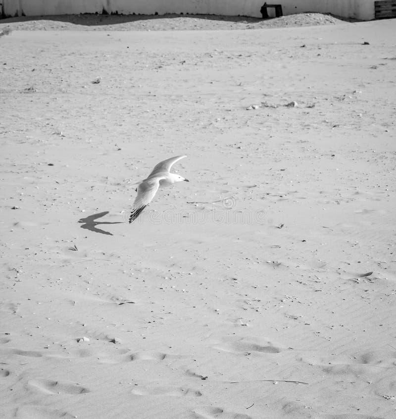 Ptaki nad plażą zdjęcie stock