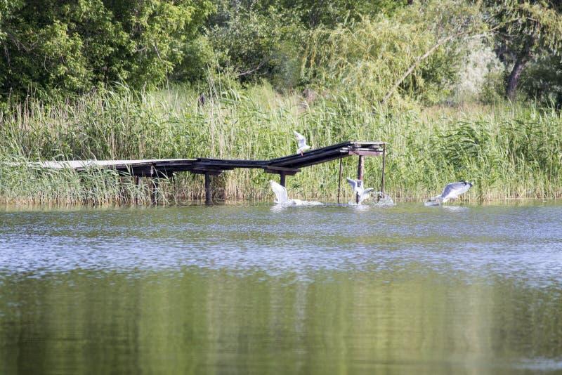 Ptaki nad wodą zdjęcie stock