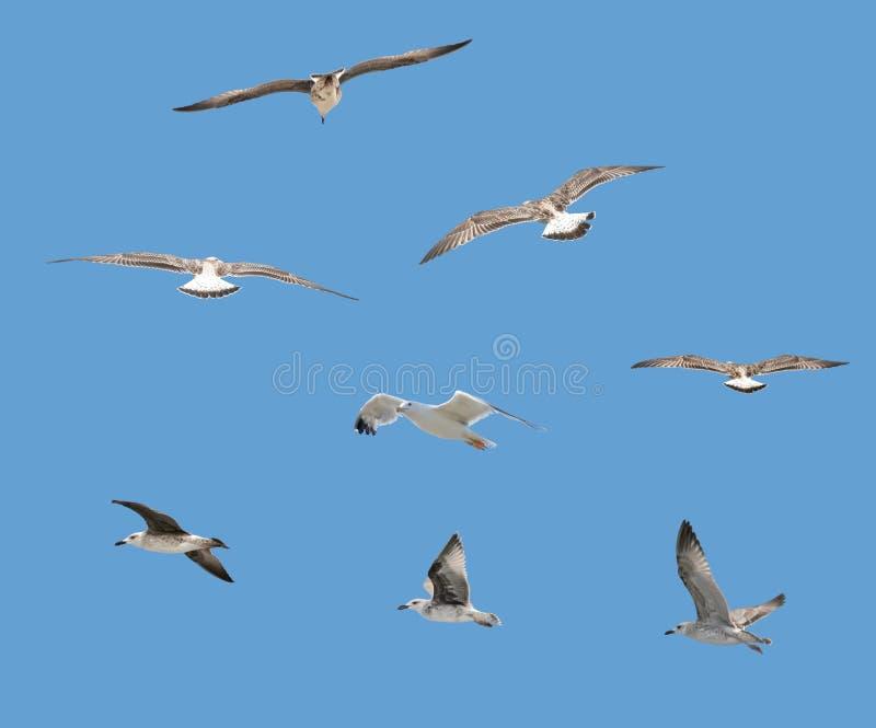 ptaki odizolowane obraz stock