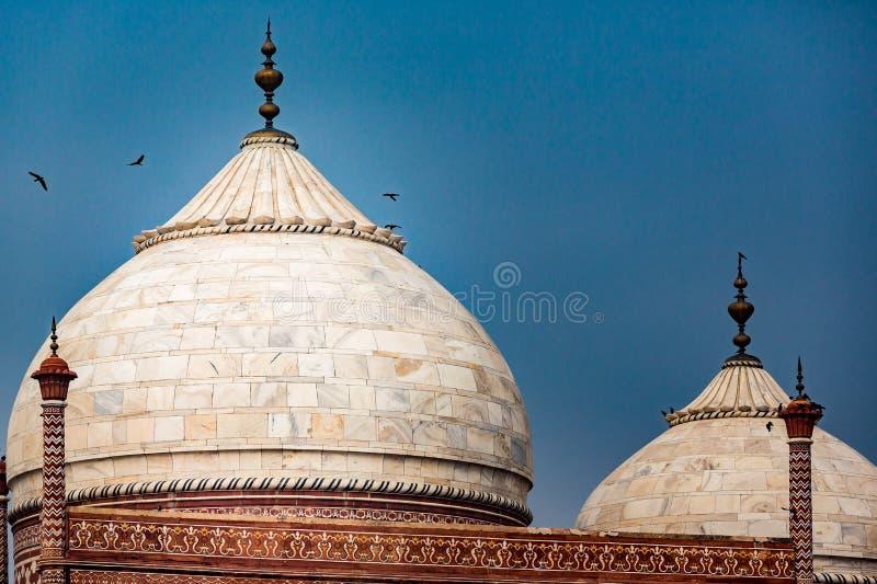 Ptaki okrążają nad wierzchołkiem marmurowe kopuły ościenni budynki obok Taj Mahal obraz stock